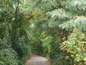 clique-naturpark-suedgelaende-berlin-07