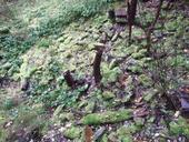 clique-naturpark-suedgelaende-berlin-33