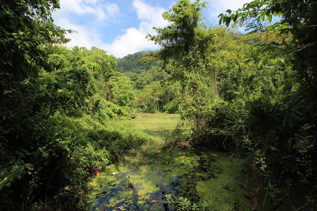 Surin Island Regenwald